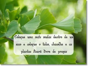 deixa-saudavel-ginko-planta-china_121-49880